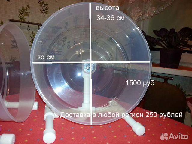 Карликовый ушастый ёж - купить, продать или - Avito ru