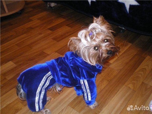 Одежда Для Собак Бу