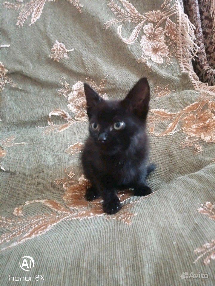Котятки в добрые руки в Георгиевске - фотография № 2