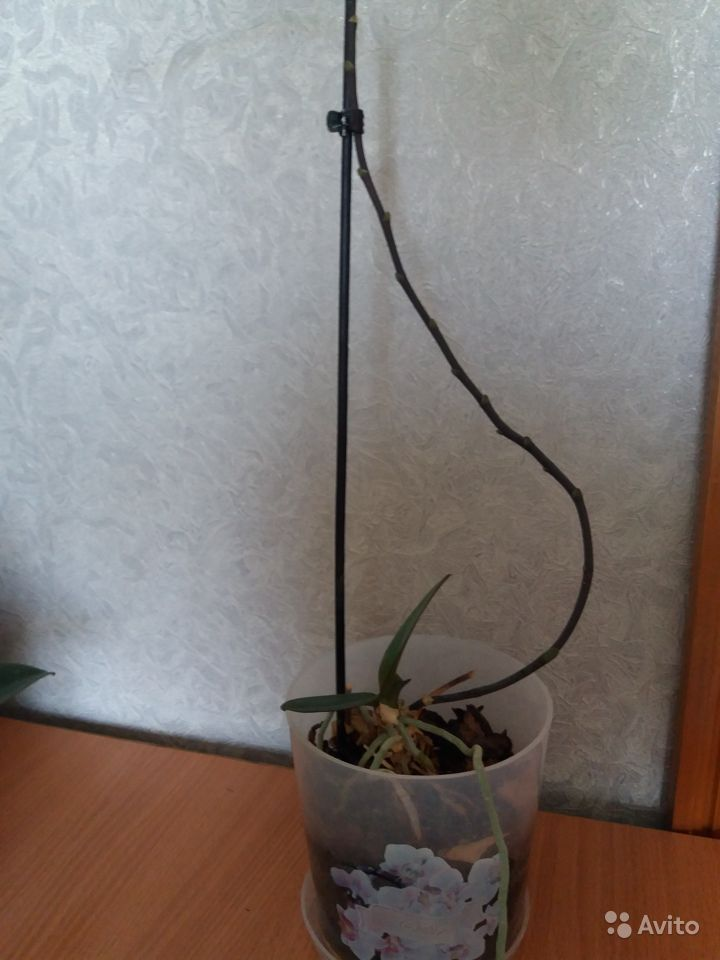 Цветы купить на Зозу.ру - фотография № 3