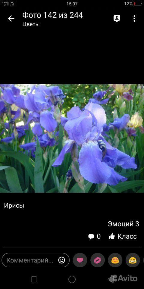 Ирисы купить на Зозу.ру - фотография № 1