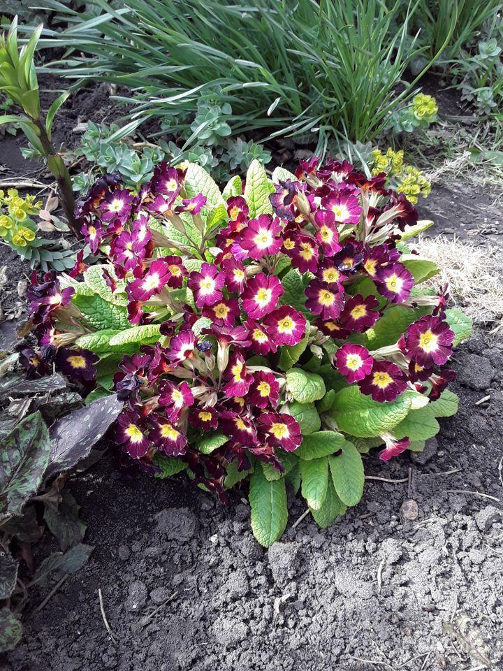 Цветы многолетние купить на Зозу.ру - фотография № 8