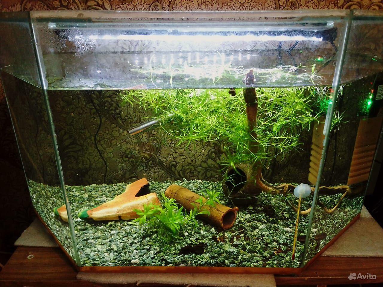 3 аквариума купить на Зозу.ру - фотография № 2