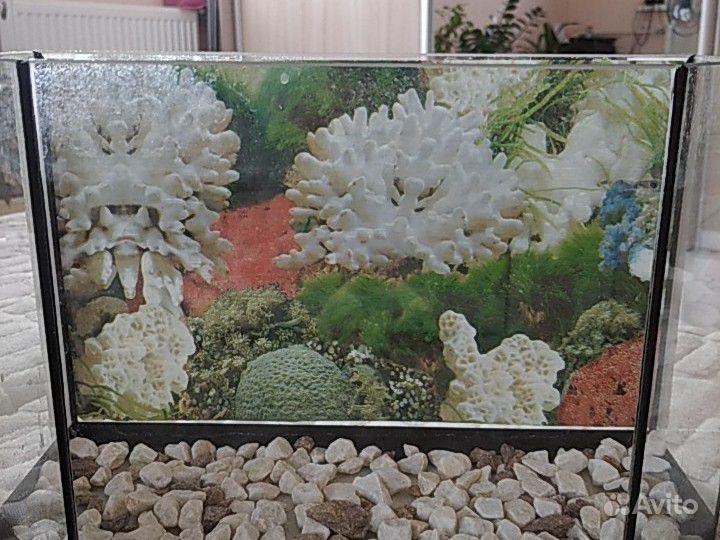 Аквариум купить на Зозу.ру - фотография № 7