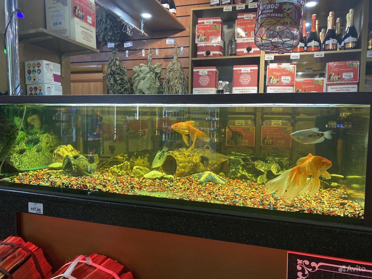 Готовый аквариум купить на Зозу.ру - фотография № 1