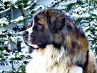 Фотосессия собак Москва и Московская область