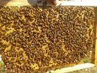 Продаю пчел