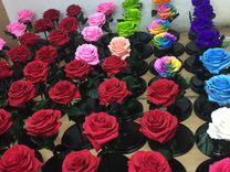 Цветов розы оптовые в санкт петербурге с базы одежды