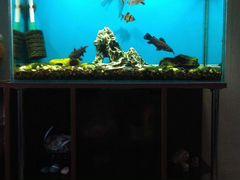 Продам 2 аквариума с оборудованием и обитателями