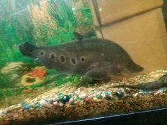Продам аквариум на стойке