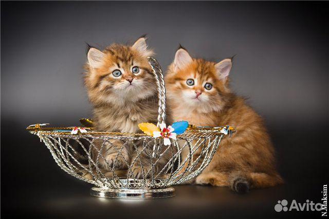 Как дать объявление про съемку котенка дать объявление из рук в руки г кфа