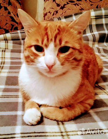 89137249811  Шикарный кот Симба