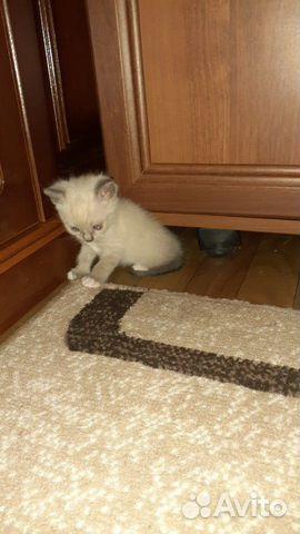 Cat satlanta