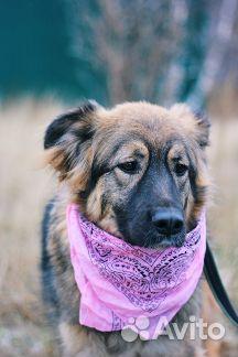 Пушистая собака в дар купить на Зозу.ру - фотография № 7
