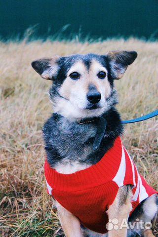 Собака ниже колена в дар купить на Зозу.ру - фотография № 4