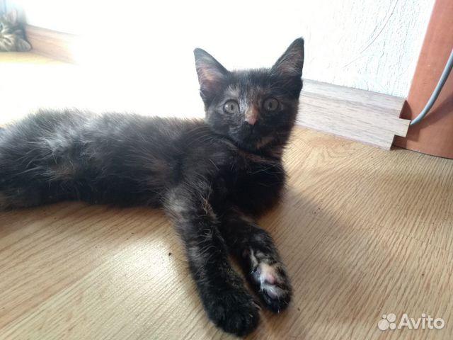 Кошка, 3-4 мес  89511434155 купить 2