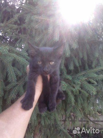 Котенок девочка  89397109841 купить 3
