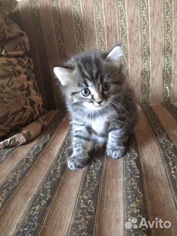 Котята озорнята  89502742399 купить 10