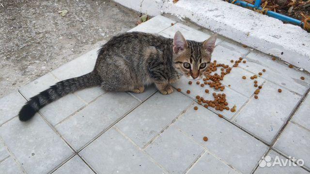 Красивый ласковый котеночек ищет хозяев