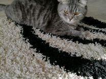 Котик кактус