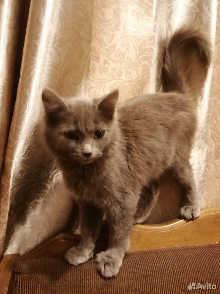 Кошечка в дар  89058795574 купить 2