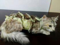 Бандаж для кошек и собак мелких пород