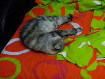 Кошка Леля