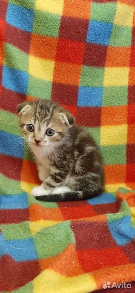 Отдам котят  89147802894 купить 2