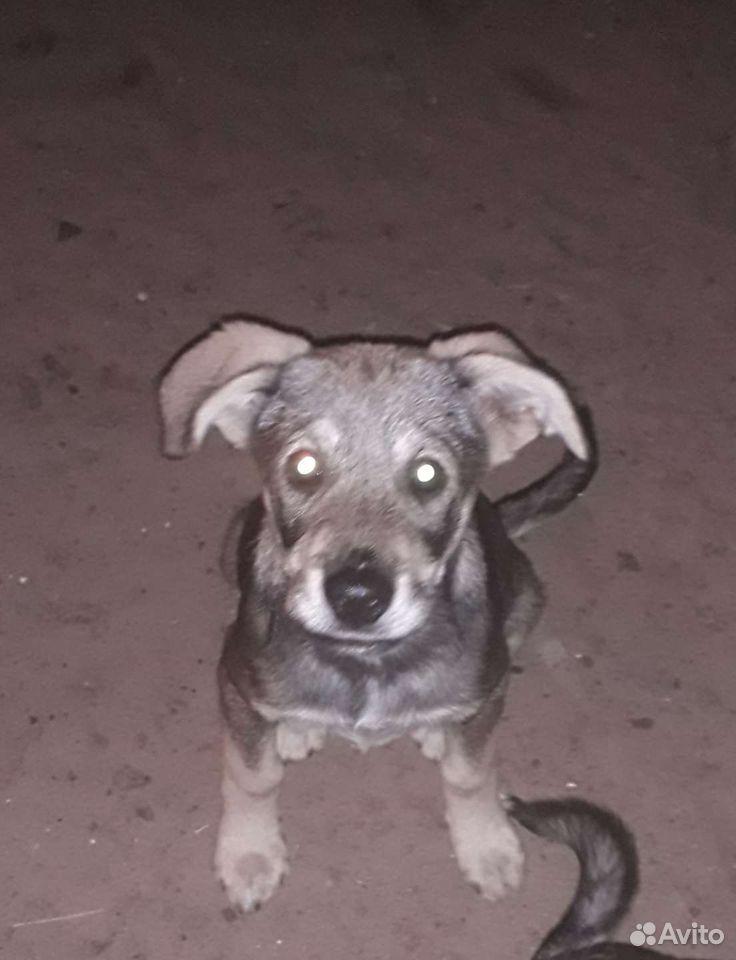 Собака  89025384151 купить 1