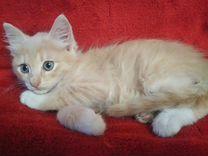 Кремовый мальчик,2 месяца