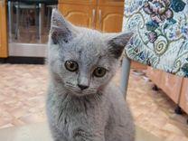 Котёнок с документами клуба Лидер