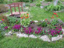 Многолетники для сада