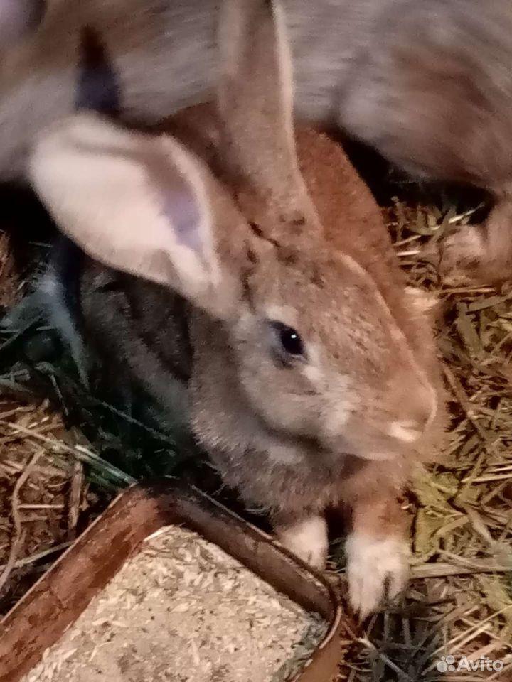 Кролики помеси крупные, здоровые  89277484764 купить 3