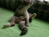 Кошечка-подросток в хорошие руки