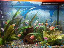 Аквариум с рыбками,растениями Д-В-ш 70-50-30