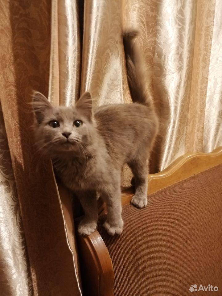 Кошечка в дар  89058795574 купить 4